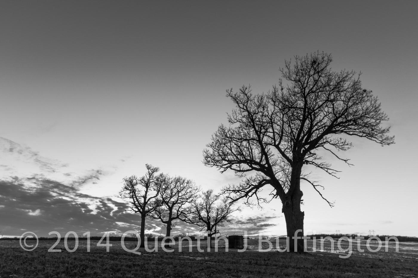 Four trees on an old farm