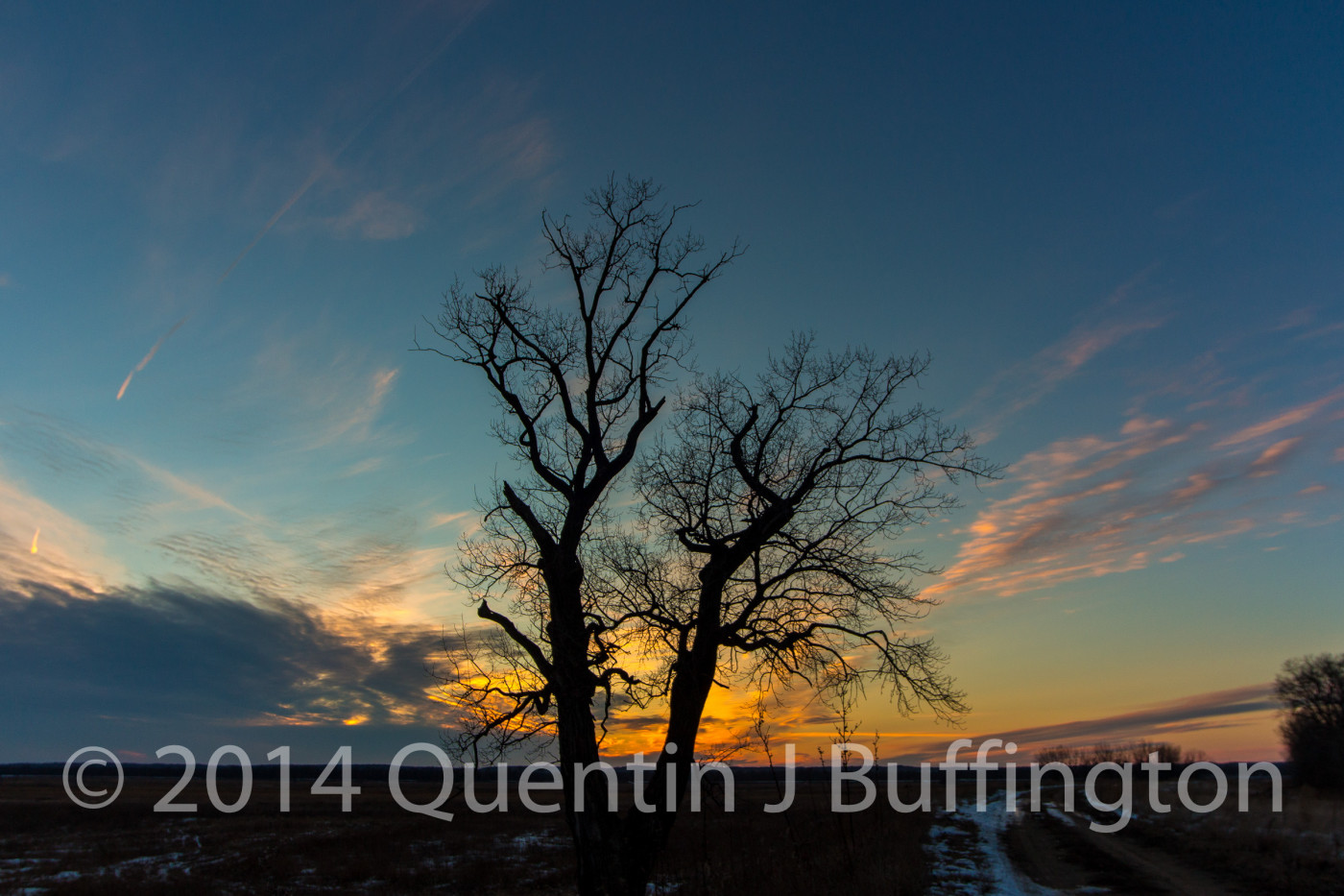 A pair of trees captured just at the moment the sun slipped below the horizon giving a warm glow.