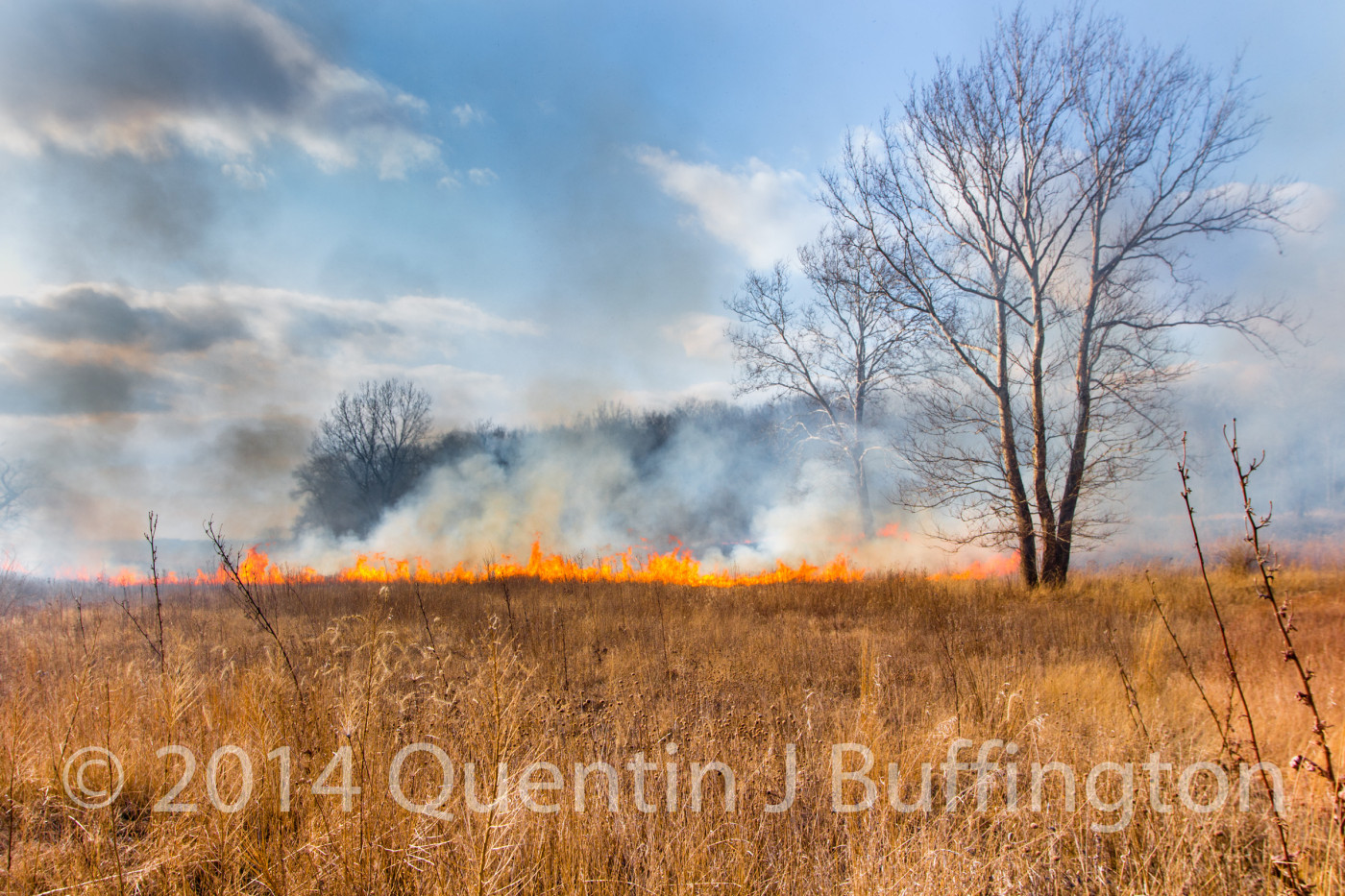 A prescribed and necessary part of a healthy Prairie, the burning of grass.
